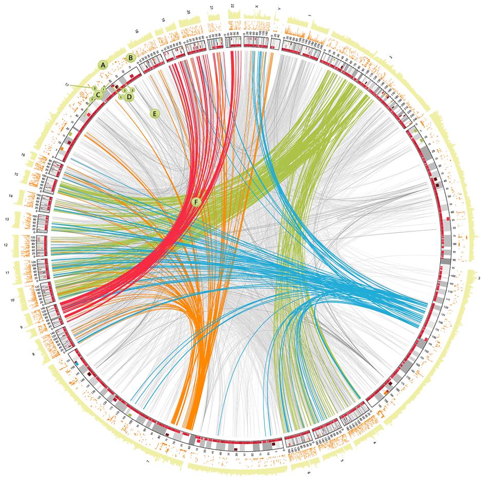 Rákgenetikai hírek, Kutatási dilemmák: a rák genetikai vagy metabolikus betegség?